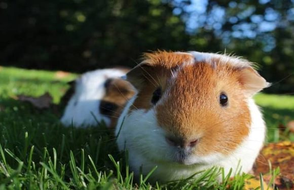 3 Small Pets That Can Be Easily Taken Care Of